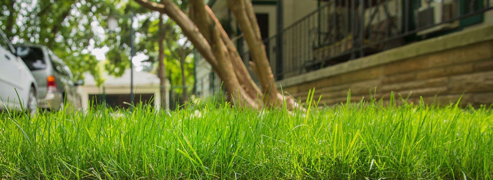 положить газон