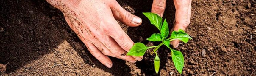 посадка рослин в саду
