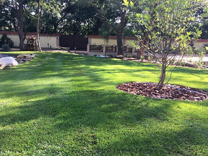 Натуральный рулонный газон